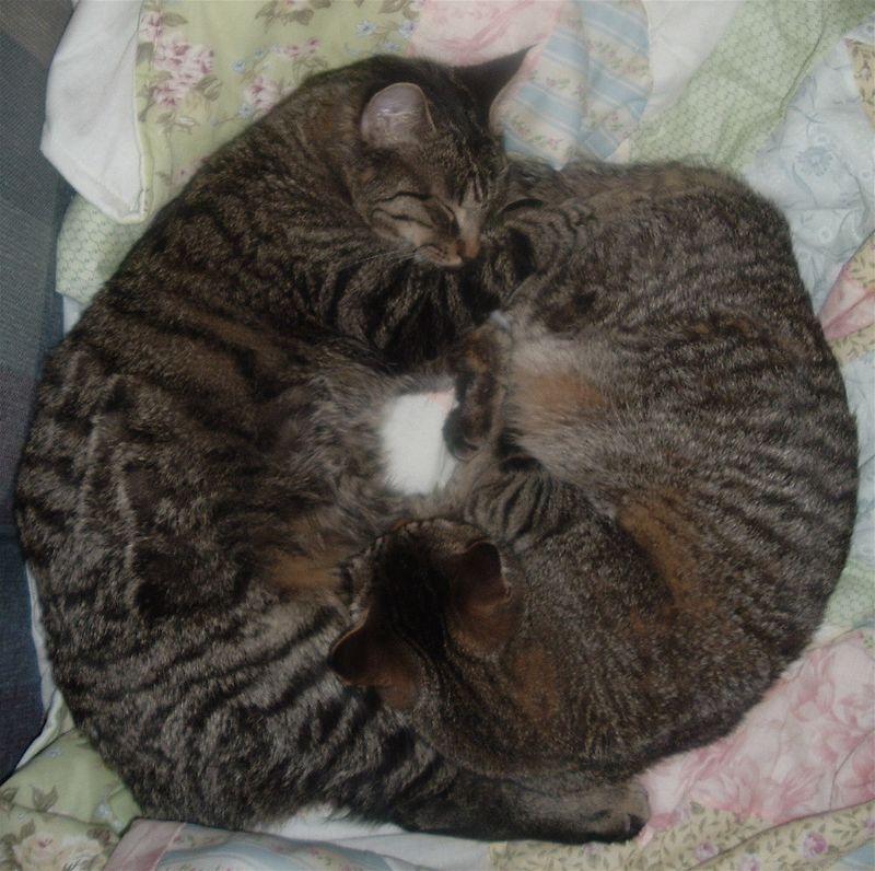 E Loves M Circle